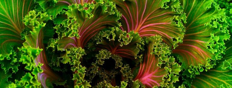 lettuce vegan diet Health and fitness